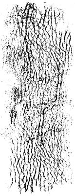 Fading Dots CS292 Kaisercraft Texture Stamp